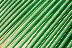 Feuillage tropical de paume de jungle, vert-foncé modifié la tonalité tir de macro de cocotiers de feuille photos libres de droits