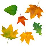 Feuillage, usines, feuilles, fond, érable, érable illustration de vecteur