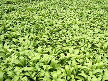 Feuillage vert Photo stock