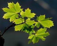 Feuillage vert Images stock