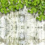 Feuillage vert clair sur le mur en pierre d'été de fond Images stock