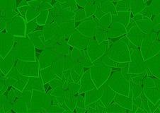 Feuillage vert dense Photographie stock