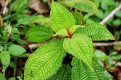 Feuillage vert juteux Lumière du soleil sur les feuilles vertes Images stock