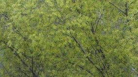 Feuillage vert passant le vent Fond abstrait normal banque de vidéos