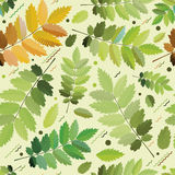Feuillage vert sans couture Image stock