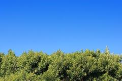 Feuillage vert sous le ciel bleu photos stock