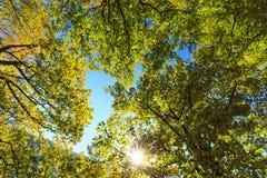 Feuillage vert vibrant photo stock
