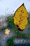 Feuille à la fenêtre pendant la pluie Images libres de droits
