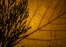 Feuille Image stock