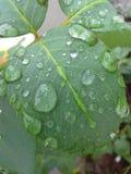 Feuille avec des baisses de pluie Image libre de droits