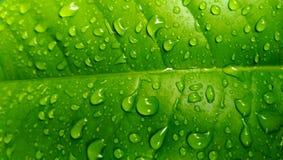 Feuille avec des baisses de pluie Image stock
