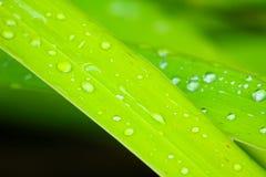 Feuille avec des baisses de pluie Photographie stock libre de droits
