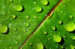 Feuille avec des gouttelettes de pluie Image stock