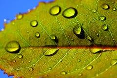 Feuille avec des gouttelettes de pluie Image libre de droits