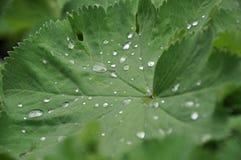 Feuille avec des gouttes de pluie Image stock