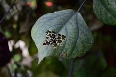 Feuille avec des trous de morsure d'insecte Photos stock