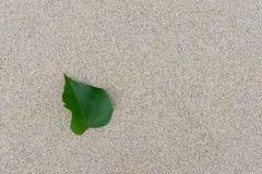 Feuille avec le sable Photos stock