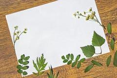 Feuille blanche d'un papier avec un cadre des usines sèches Photographie stock