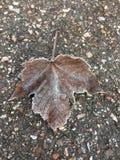 Feuille brune congelée sur le trottoir Photos stock