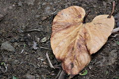 Feuille brune en forme de coeur au sol Photo stock