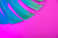 Feuille colorée au néon de monstera de vert de plante tropicale sur le fond rose en plastique acide photo libre de droits