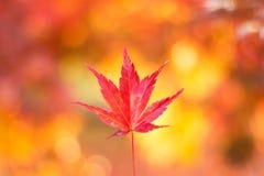 Feuille colorée d'automne avec le bokeh Photos libres de droits