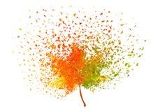 Feuille colorée d'automne, vecteur Photo stock