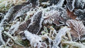 Feuille congelée Photos libres de droits