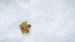Feuille congelée Photo stock