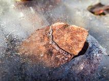 Feuille congelée Image stock