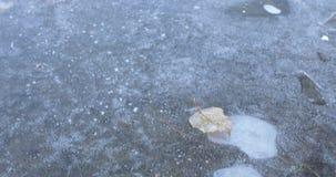 Feuille couverte de gelée et d'étang clips vidéos