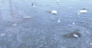 Feuille couverte de gelée et d'étang banque de vidéos