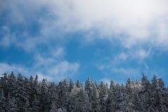 Feuille couverte de neige Photo libre de droits