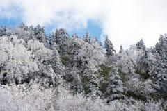 Feuille couverte de neige Image stock