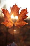 Feuille d'érable avec le coupe-circuit de coeur au coucher du soleil photographie stock