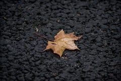 Feuille d'érable d'automne sur le trottoir Image libre de droits