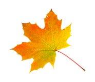 Feuille d'érable de feuillage d'automne Images libres de droits