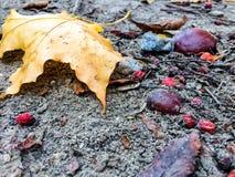 Feuille d'érable jaune au sol Image libre de droits