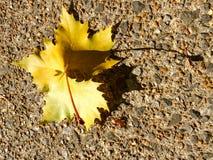 Feuille d'érable jaune sur la pierre de caillou Image libre de droits