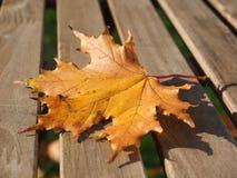 Feuille d'érable jaune sur le bois photo stock