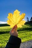 Feuille d'érable jaune sur le ciel en parc Images libres de droits