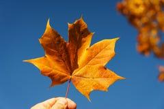 Feuille d'érable orange lumineuse dans des mains avec un ciel bleu clair sur le fond image libre de droits