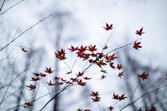 Feuille d'érable près de Xihu photos stock