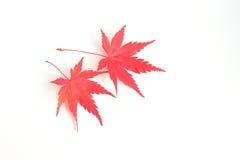 Feuille d'érable qui a tourné le rouge Pour la coloration et la cuisson des plats Photos libres de droits