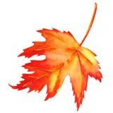 Feuille d'érable rouge comme symbole d'automne Photos libres de droits