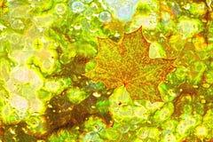 Feuille d'érable rouge dans l'abstraction image stock