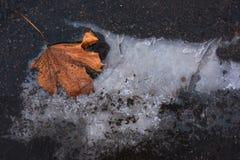 Feuille d'érable sèche en glace sur l'asphalte Photos stock