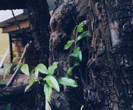 Feuille d'arbre Photos libres de droits