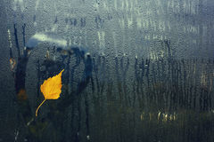 Feuille d'arbre de bouleau d'automne sur la fenêtre humide Photos libres de droits