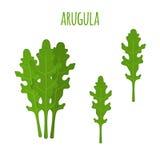 Feuille d'Arugula Légume vert végétarien Salade du marché de ferme Style plat Images stock